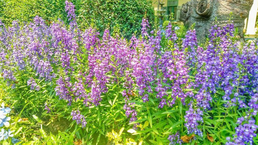 Flower Multi Colored Purple Plant Green Color Close-up