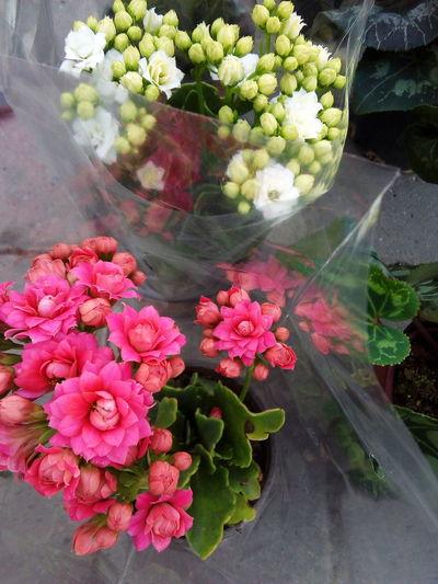 flowers urban