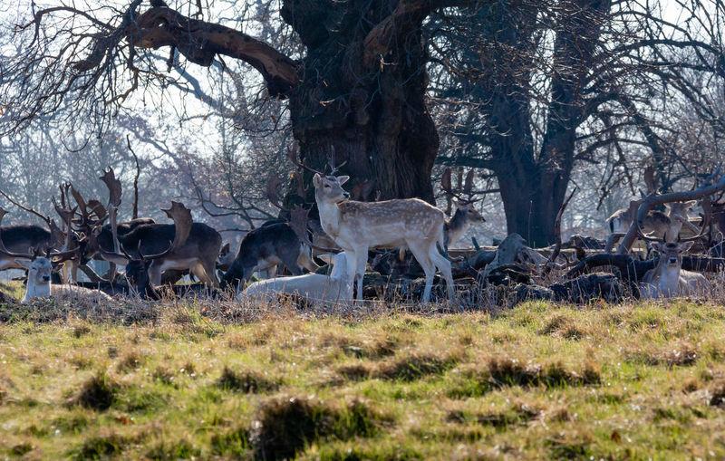 Deer Outdoors Nature Animal Themes Mammal Animal Wildlife No People Animal WoodLand Herbivorous Day Group Of Animals