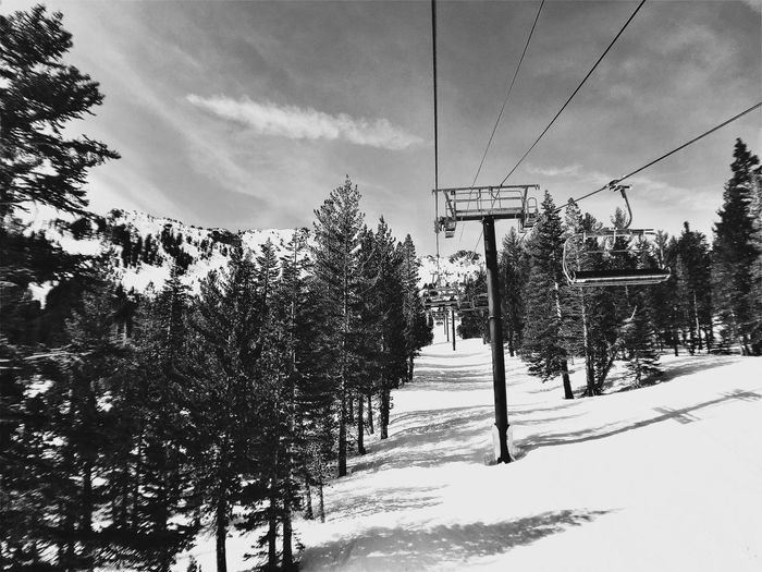 Empty Chairlifts Amidst Trees Over Snow Covered Field