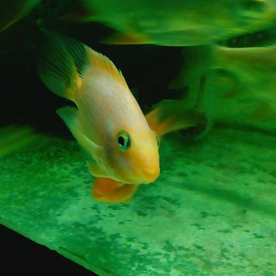 Gods Creation 😚 Fish Aquarium Old Times Cute Fish  Shocking Look might be Surprised Look Baby Fish 🐠 Love This Creation Beautiful Art Of God Phone Photography Love This Fish No Time To Waste Capture Moments Treasure Of Memories Special For Some One Special Moment Special👌shot 🐠😍📷