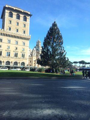 Christmas Tree Walking Around Hello World Roma