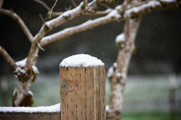 Wood - Material Snow Nature Cold Temperature Winter Beauty In Nature Growth Outdoors Tranquility Close-up No People Day Tree Snow Photography Outdoor Photography Deck Snow ❄ Winter Weather Nature Beauty In Nature