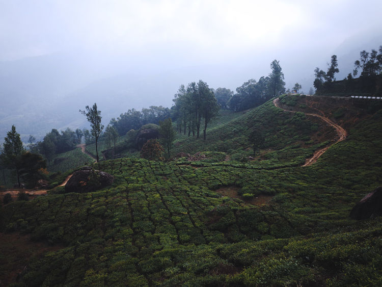 India India Landscape Munnar Munnar India Munnar Kerala Munnar Tea Estates Tea Estates Beauty In Nature India Tea Estates Kerala Kerala India Landscape Landscapes Landscapes Of India Nature Outdoors Outdoors Photography Outdoors❤ Terraced Field Tranquility