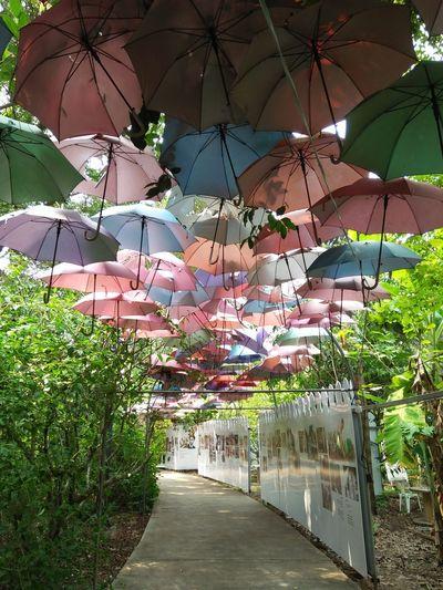 Umbrellas Tree