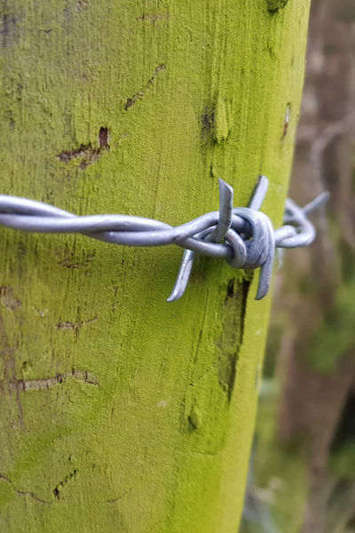 Barbed Wire Barrier Close-up Damp Climate Fence Fence Post Green Color Outdoors Wire