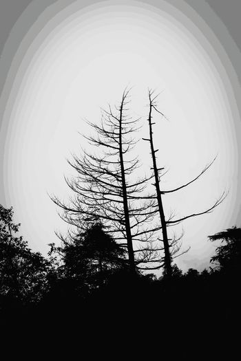 Blackandwhite Abstract Tree No People Sky Nature Backgrounds Outdoors Beauty In Nature Tree Nature Black Foreground Poster Color Effect Black And White Friday