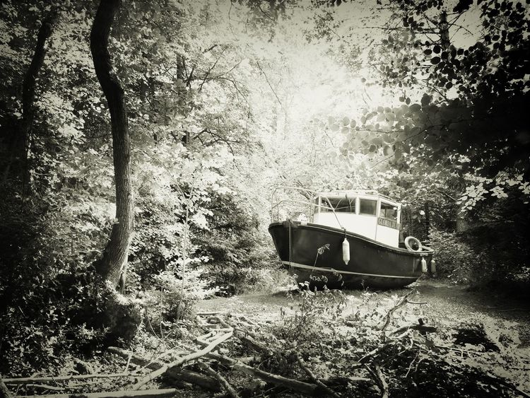 Boats Boat Woods Forest Black And White Black & White Spooky Abandoned