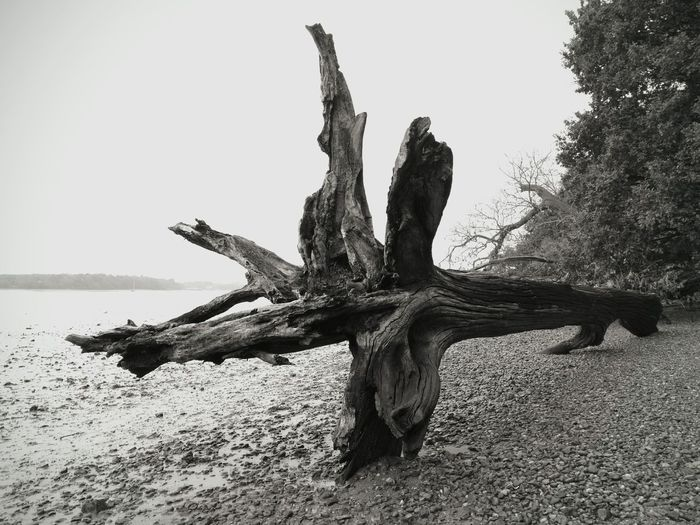 Blackandwhite Photography Beach No People Outdoors Deben River, Suffolk Landscape Photography Driftwood Riverbank View Textures And Surfaces