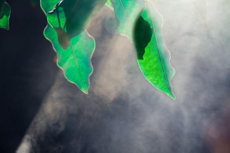 Close-up of green leaf against sky