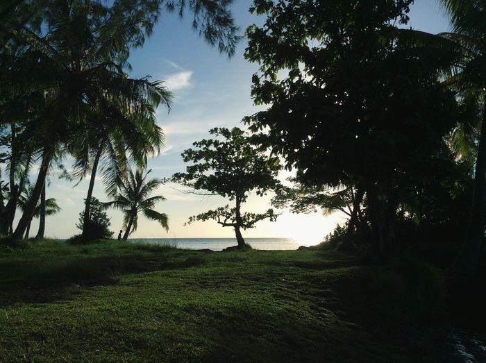 ☀️🌴🐠🌺🐢 Enjoying Life Relaxing Sunset Tahiti Tahiti Sunset EyeEm Nature Lover Love It Hello World