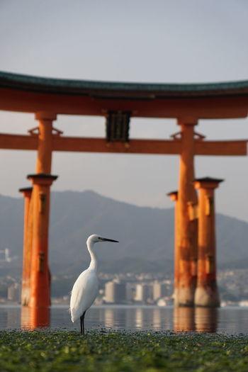 Egret perching in river