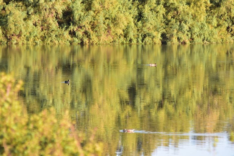 Lake Animals In The Wild Bird Reflection Water Animal Themes One Animal Nature Animal Wildlife Water Bird Autumn Colors Waterfront Day Outdoors Swimming Growth Floating On Water No People Tree Swan