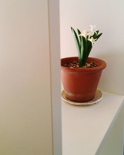 Flower Vase Plant Simplicity Freshness Nature Beauty Product Indoors  Flower Pot No People Fragility Sparse Close-up Beauty In Nature Flower Head Skin Care Day Zenfone Photography Zenfone3 Tokyo,Japan Japan Photography Hyacinth Hyacinths Leaf
