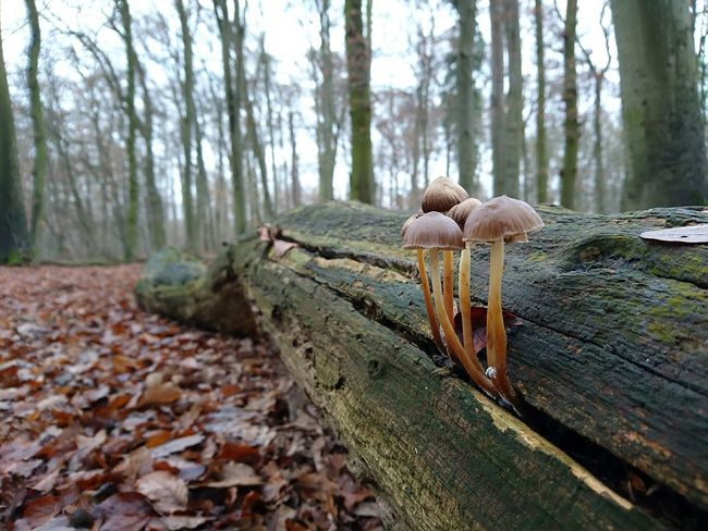 Dezember Pilze... Winter_collection Beauty In Nature 🇩🇪Germany Streamzoofamily Sony Xperia Photography. EyeEm Deutschland No People, Mushrooms 🍄🍄 Fungus On Tree IMography