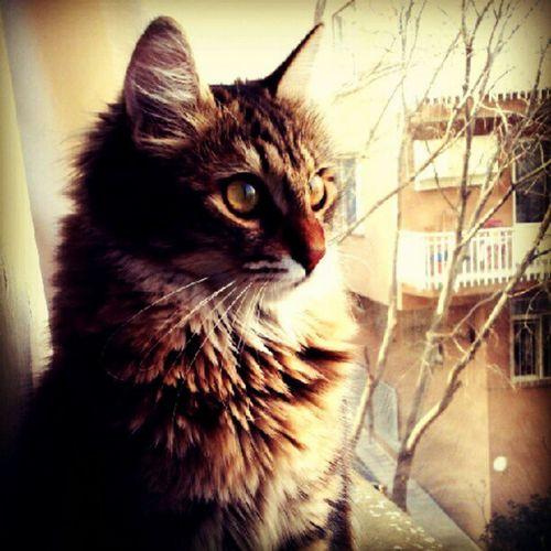 Pettaksi , Catsofinstagram ,Petsofinstagram , Instacat , cats, pets, 50likes, pussycat, idkwhatothertagishoulduse, bestof, petstagram, missingcandy, bojangles, kitty, castagram, cat, meow, tc, gato, kitten, neko, beautiful, cute, love, sweet, random, catlover, funny