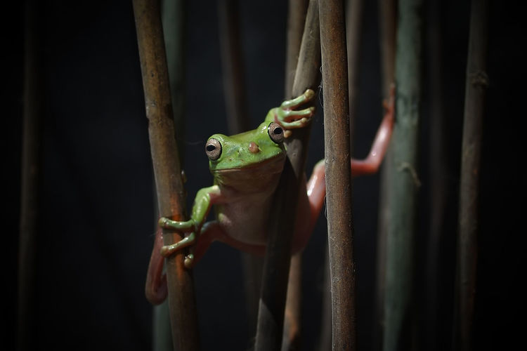 Frog Attractions Macro Froog Reptile Lizard Animal Wildlife Animal Tree Trunk One Animal Tree Green Color Animal Themes Nature Animals In The Wild Outdoors Day Close-up