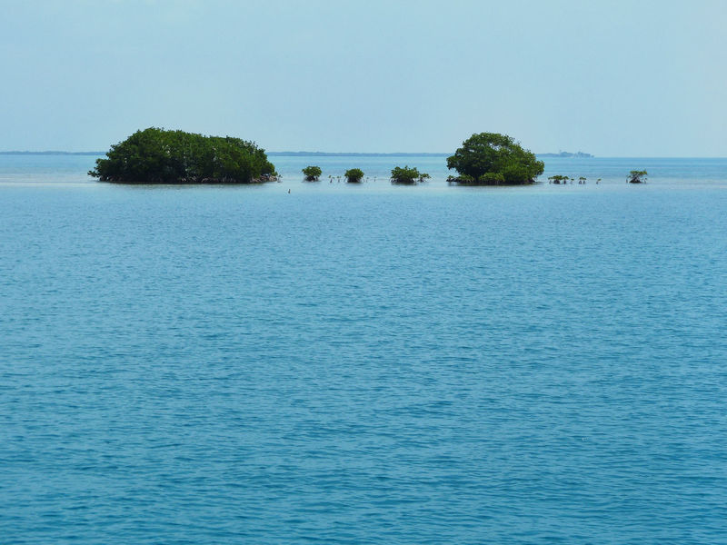 Beauty In Nature Blue Calm Clear Sky Day Horizon Over Water Idyllic Mangrove Island Mangroves Nature No People Non-urban Scene Ocean Outdoors Remote Rippled Scenics Sea Sky Tranquil Scene Tranquility Water Travel Photography Belize  Travel