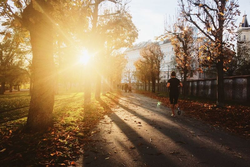 Autumn Fall Autumn Colors Fall Beauty Runner Sport Jogging Sun Evening Sun Park Urban Escape 43 Golden Moments Adventures In The City