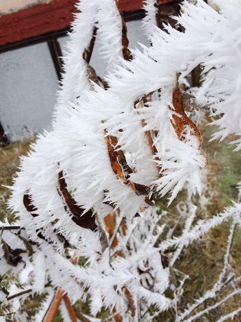 Красивые снежные иголки покрыли весь город после густого тумана !!)))) красота неописуемая )) север лабытнанги зима First Eyeem Photo