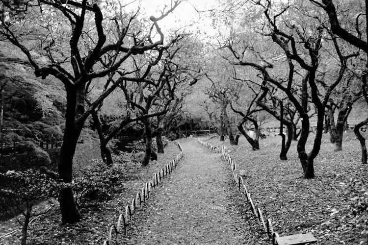 Taking Photos Film Photography BESSA-T Acros100 モノクロフィルム Blackandwhite Hello World Enjoying Life 京都 Light And Shadow ELMARIT-M 28mm F2.8