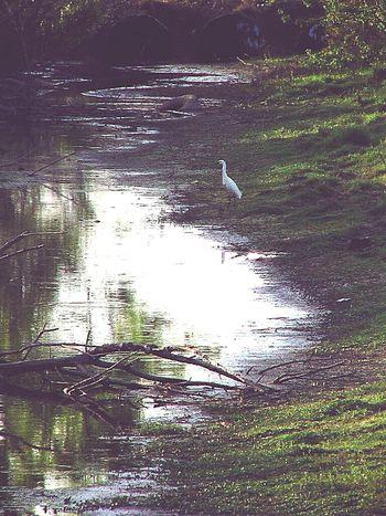 Nature On Your Doorstep Taking Photos South Louisiana Louisiana Swamp louisiana crane