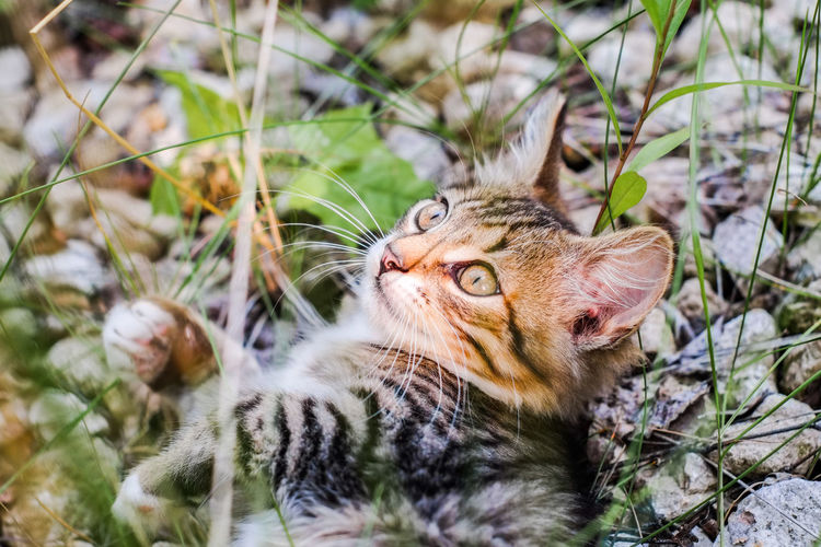 Close-up of tabby cat relaxing on field