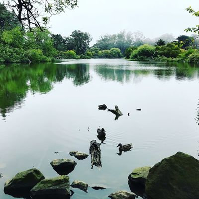 Fog Stow Lake Ducks At The Lake Water Lake Reflection Tree Plant Nature Tranquility Beauty In Nature Day Animals In The Wild No People Animal Wildlife Waterfront Bird Tranquil Scene Outdoors