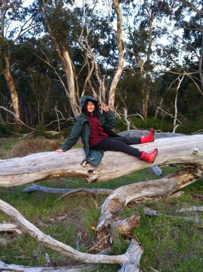 Tree Planting Landscap Scenary