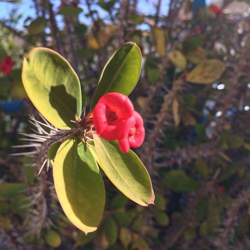 Pretty Flower and pretty Photo!
