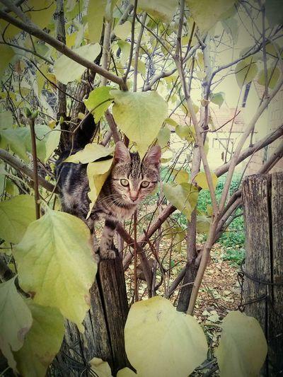 Perfect Match Autumn Colors Cats Novembar Nature Hide And Seek Cat Hiding