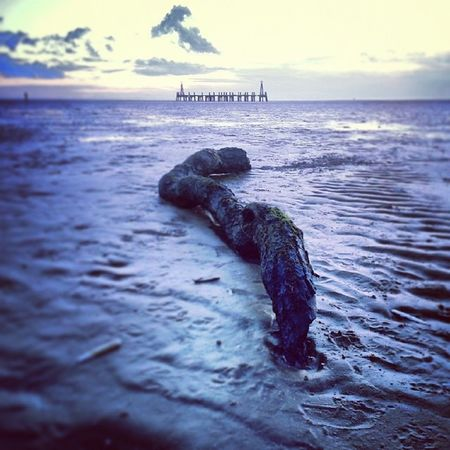 Snake branch! Lythamstannes Stannes Beach Wintersday evening photo photography