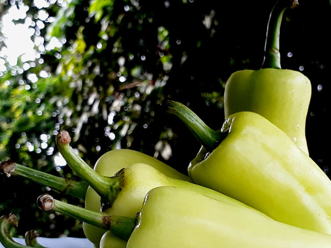 Chilies Green EyeEmNewHere Close-up Day Freshness Green Color No People Outdoors