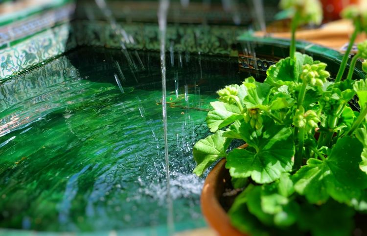 Ceramic Pot Potted Plant Freshness Clear Water Pot Flowers,Plants & Garden Sorolla Courtyard  Spanish Springtime Madrid Madrid Spain Nature Water Leaf Close-up Green Color Plant Fountain Drinking Fountain Spraying Watering Splashing Drop Pond Flowing Water