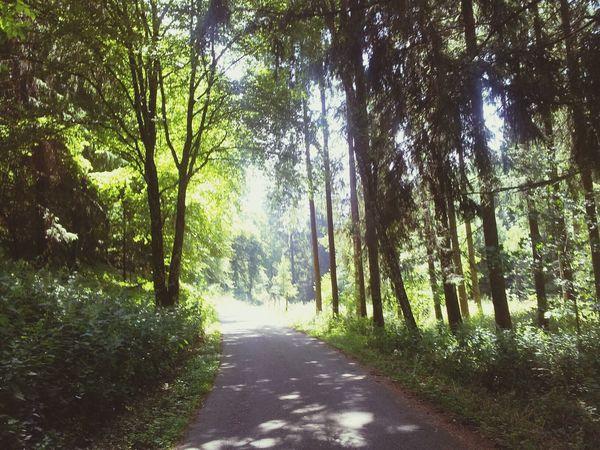 Wunderschöner Spaziergang durch den Wald ♡