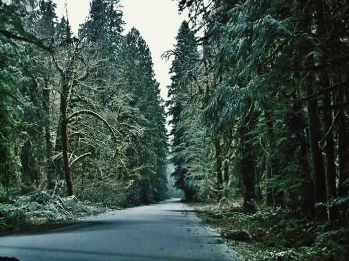 Tree The Way Forward Forest Tranquil Scene Tranquility Non-urban Scene Scenics Nature Diminishing Perspective Growth Beauty In Nature Vanishing Point Day Empty Road Outdoors WoodLand Green Color Single Lane Road Tall - High No People