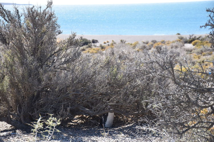 Barely Visible Hidding Hide And Seek Nature No People Penguin Scenics You Cant See Me