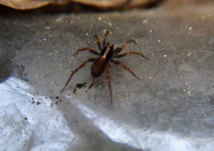 Animal Themes Animal Wildlife Animals In The Wild Jumping Spider Nature No People Outdoors Spider