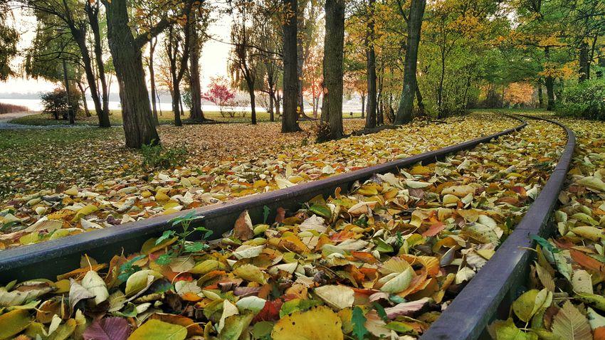 Autumn Leaves Fall Poland S6edge+ Samsungphotography Colorful Trees November