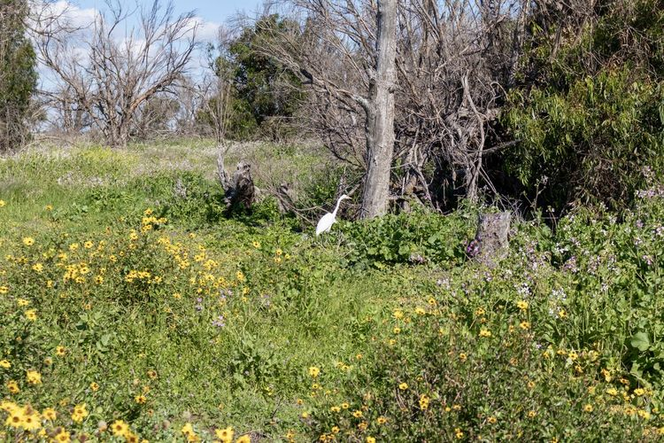 egret in field of wildflowers Bird Plant Tree Nature Land Day Animal Forest Growth Animal Themes No People Flower One Animal Animals In The Wild Green Color Outdoors Beauty In Nature Environment Flowering Plant Animal Wildlife Mammal WoodLand