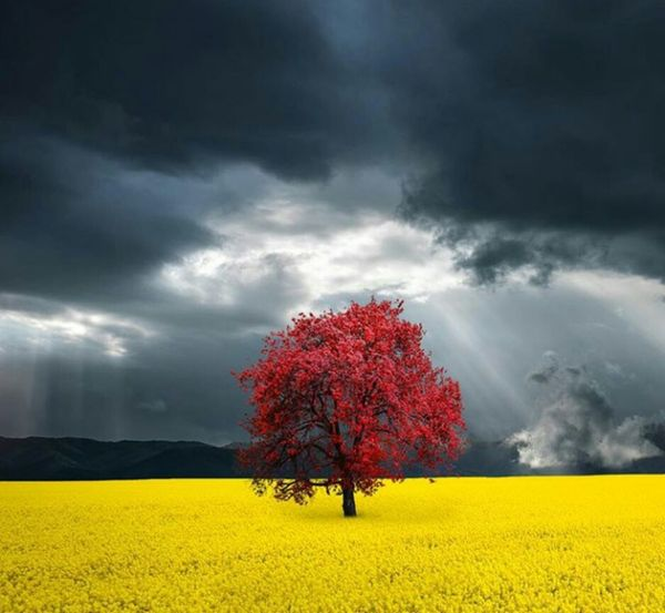 Yellow Agriculture Nature Beauty In Nature Crop  Rural Scene Landscape