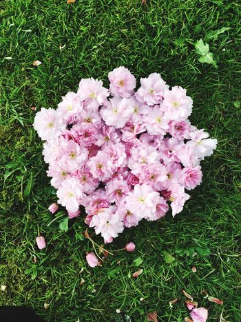 Flower Grass Growth Pink Color Nature Beauty In Nature Plant