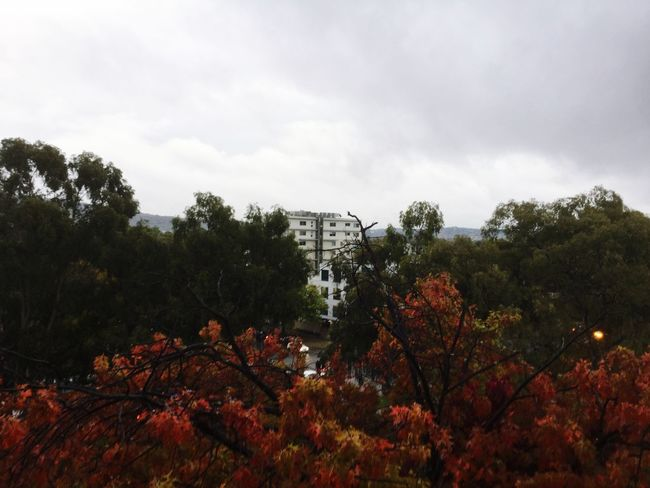 Autumn Canberra Check This Out Cbr Visitcanberra