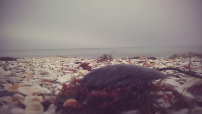 Beach Beauty In Nature Close-up Horizon Over Water No People Sea Seashells Tranquility