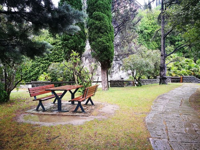 Empty park bench against trees
