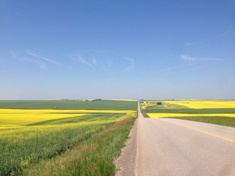 Riding My Motorcycle Between Stettler & Calgary - Had To Pull Over To Capture This.. Canola Farm Alberta