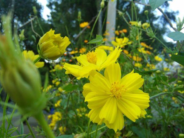 Leaves Flowers Yellow Colour Plants Nature Beautifulinnature Naturalbeauty Photography Landscape Daylight Beautiful Flowers