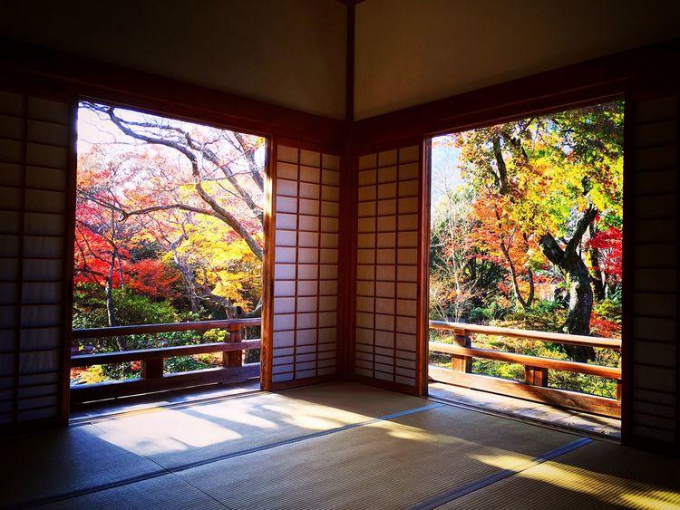 宝筐院 嵯峨野 京都 Kyoto Window 紅葉 Kyoto Autumn Autumn Beauty In Nature Japanese Garden Autumn Leaves Autumn Colors Kyoto, Japan Relaxing Enjoying Life Hello World Travel Destinations