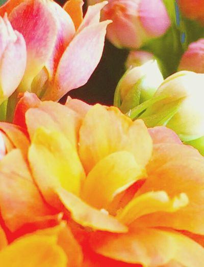 Autumn Colors EyeEm Best Shots - Autumn / Fall Flower Collection Loving Flowers