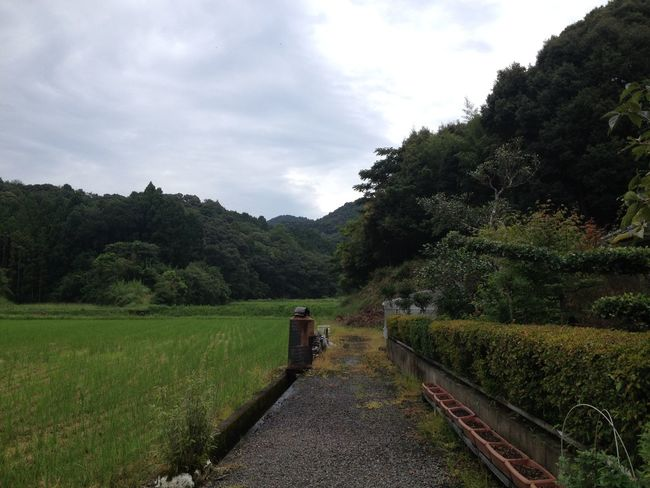Day Green Color Nature No People Outdoors たんぼ みち 山